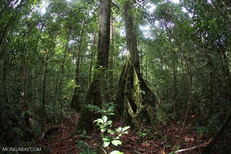 Rain Shadows and Rainforests