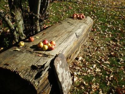Let's Go Shake the Mango Tree, Cherry Tree, and Apple Trees